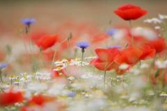 flora-risaia-riso-baraggia