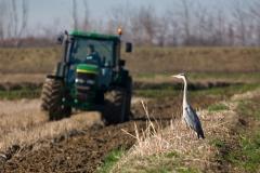 lavoro-aratura-risaia-dop-uccello