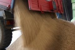 raccolta-riso-baraggia-scarico