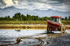 semina-riso-baraggia-dop